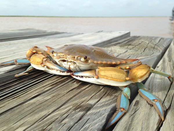 Mission-Aransas Reserve wins big in Estuarine Photo Contest