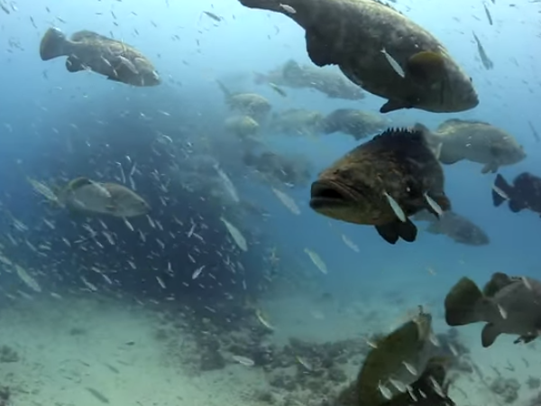 Unmanaged Fishing At Spawning Sites Put Species Economies