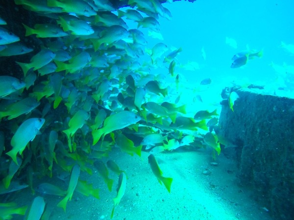 In Search of Spawning Aggregations in the Sea of Cortez