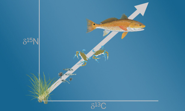 A Look at the Multi-Tool of Aquatic Science