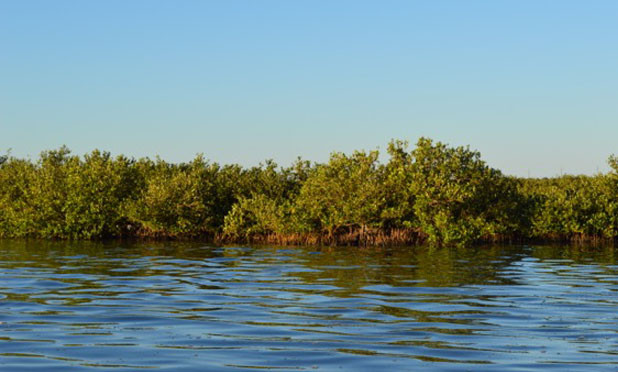 Viruses in mangrove muck may be important influencer of methane emission