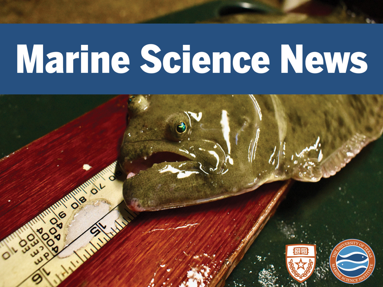 Marine Science News - 1st edition 2020