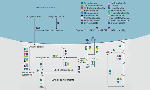 New Review updates knowledge on and biodiversity of Archaea