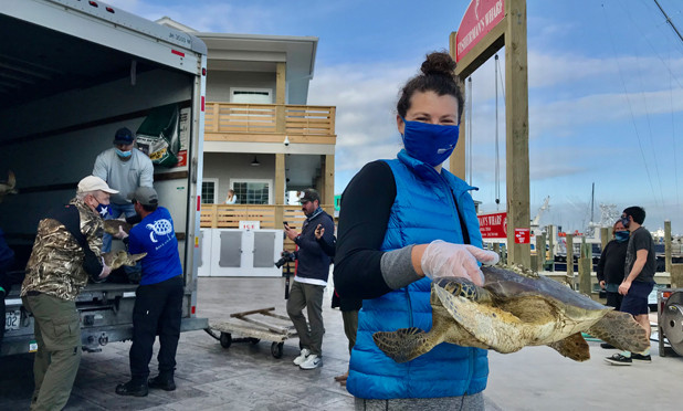 Turtles headed for release