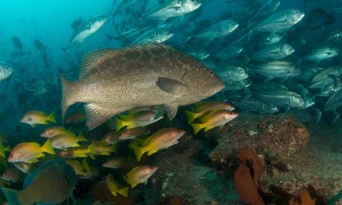 Researchers Assess Sustainability in Baja Fisheries