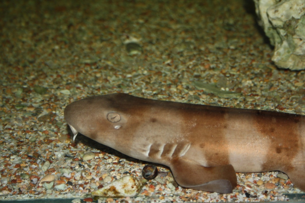 Scientists document longest-ever case of sperm storage in sharks