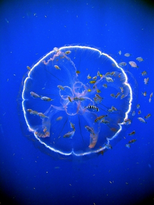 b2ap3_thumbnail_Operation-Deep-Scope-2005-Expedition-NOAA-Office-of-Ocean-Exploration_web.jpg