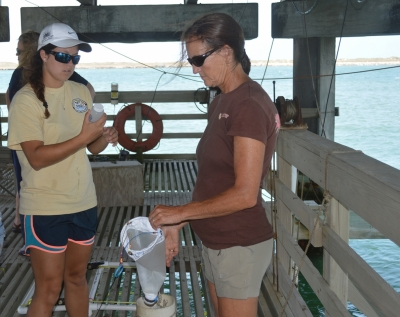 b2ap3_thumbnail_TOTE2014_Plankton-Sampling-on-UTMSI-Pier_web.jpg